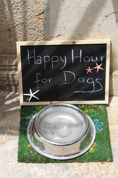 cucina casalinga per cani