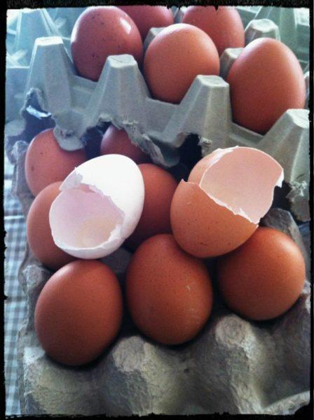 integratore di calcio i gusci d'uovo