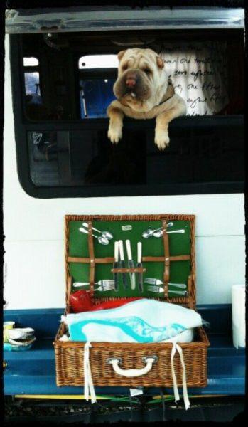 cucina casalinga per cani in vacanza