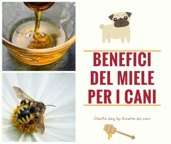 benefici del miele per i cani