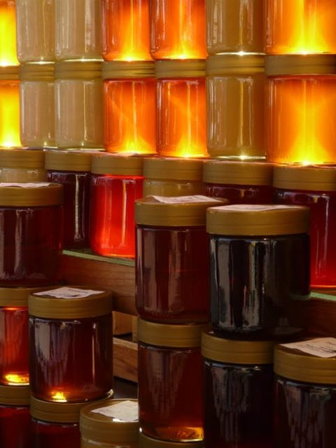 benefici del miele per i cani - ogni miele ha le sue proprietà