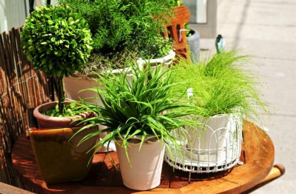 le più comuni erbe tossiche per cani e gatti