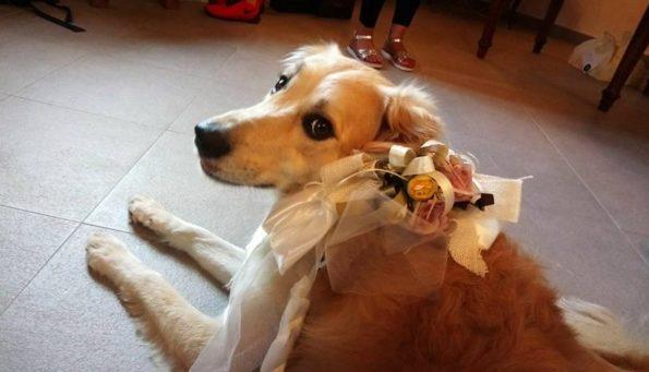 Matrimonio con Fido - arriva il wedding dog