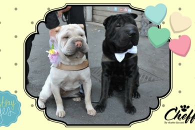 matrimonio con fido arriva il wedding dog