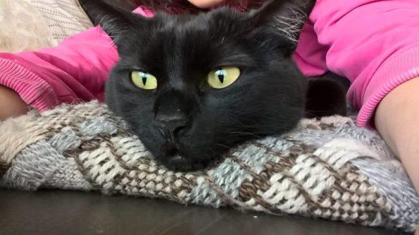 manzo e frattaglie in casseruola per gatti