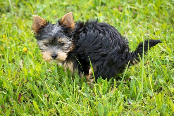 le feci del cane controllo di salute