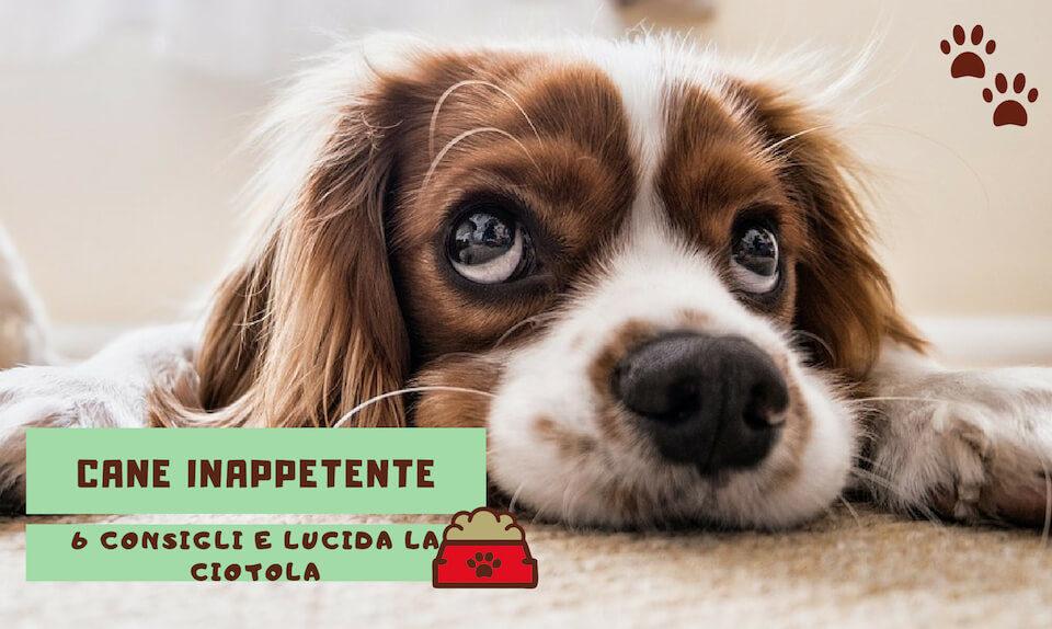 cane inappetente: 6 consigli e lucida la ciotola