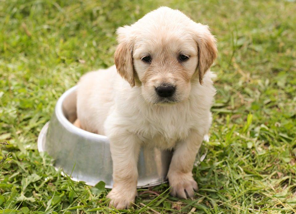 alimentazione casalinga cane quantita