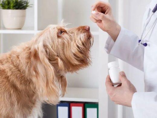 fermenti lattici per cani: cosa c'è da sapere