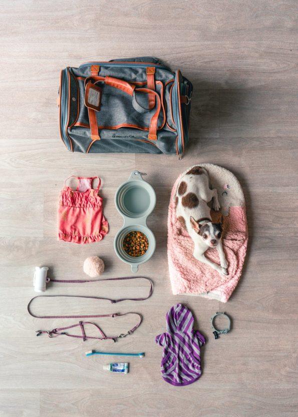 cani in vacanza: cosa portare