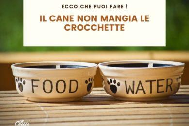 cane non mangia crocchette